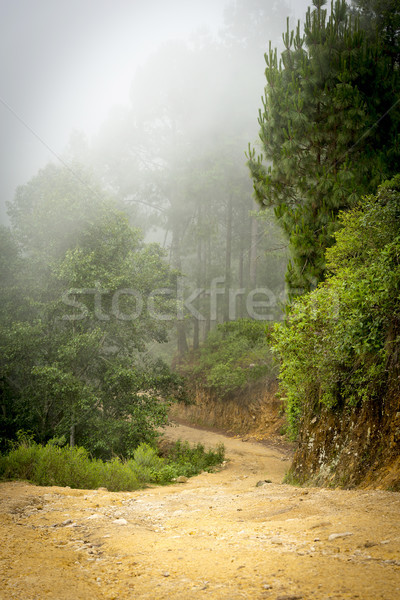 Misty Forest Guatemala Stock photo © THP