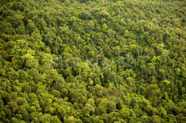 лес джунгли текстуры дерево лист Сток-фото © THP
