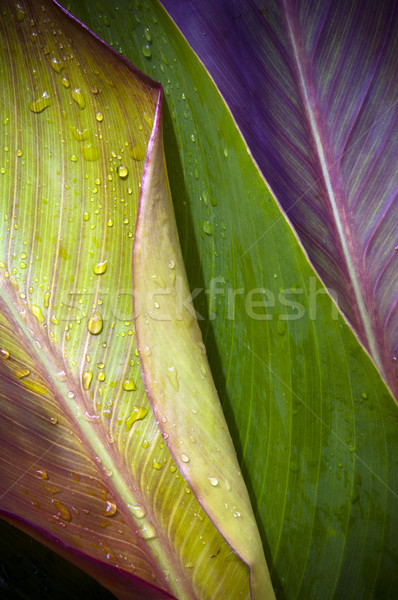 Three Leaves Stock photo © THP