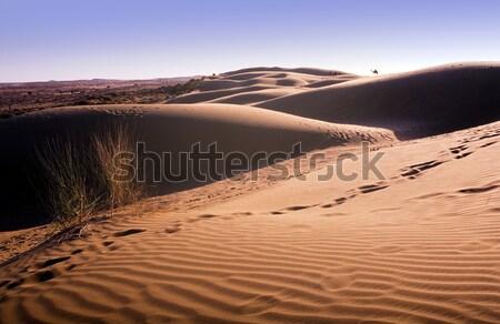 Désert dune de sable Inde texture paysage lumière Photo stock © THP