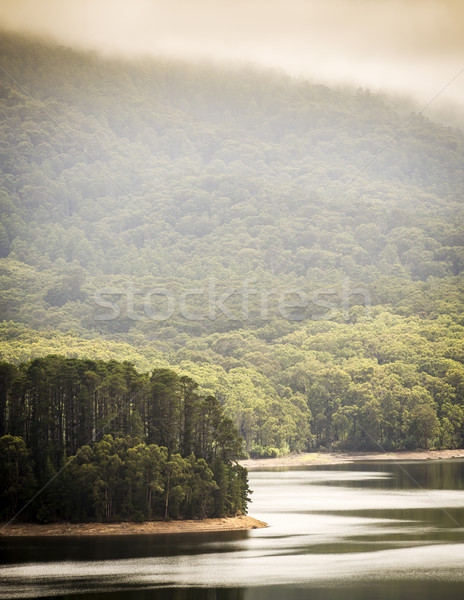 Lake Forest Stock photo © THP