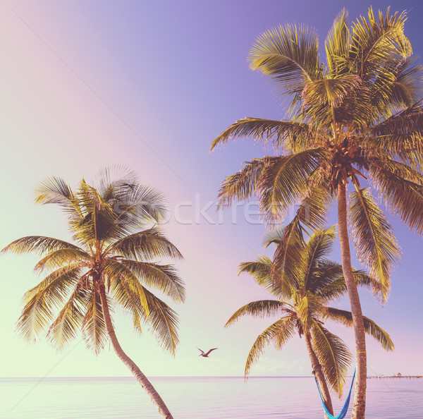 Retro Tropical Beach Background Stock photo © THP