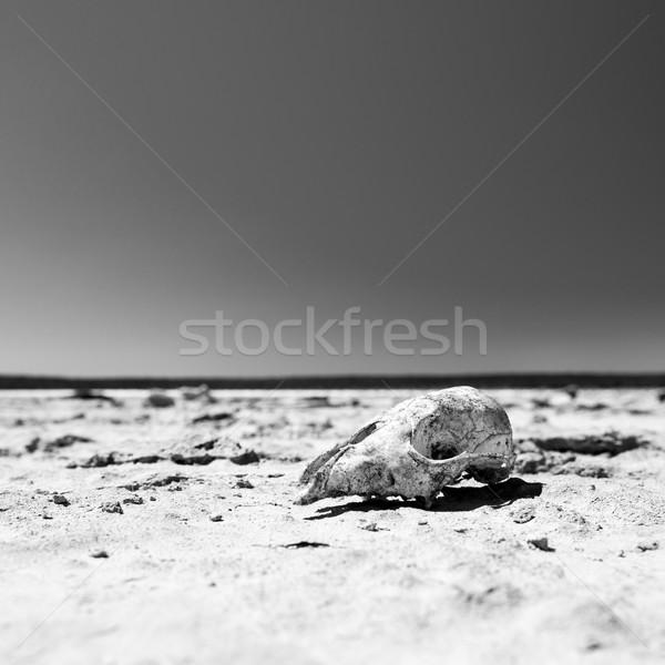 Skull in Desert Black and White Stock photo © THP