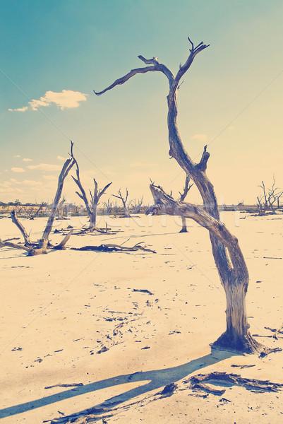 Klímaváltozás kidőlt fa alsónadrágok végtagok só tó Stock fotó © THP