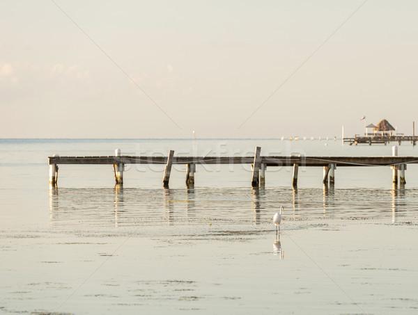 古い 木製 ドック 水 鳥 ストックフォト © THP