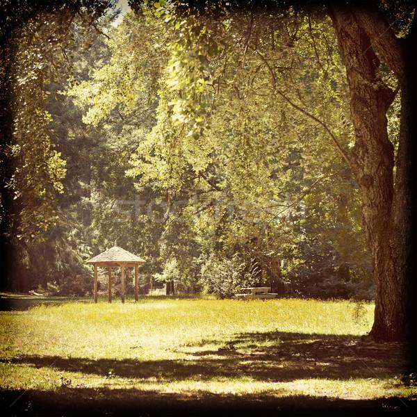 Park barınak sevimli dev ağaçlar bağbozumu Stok fotoğraf © THP