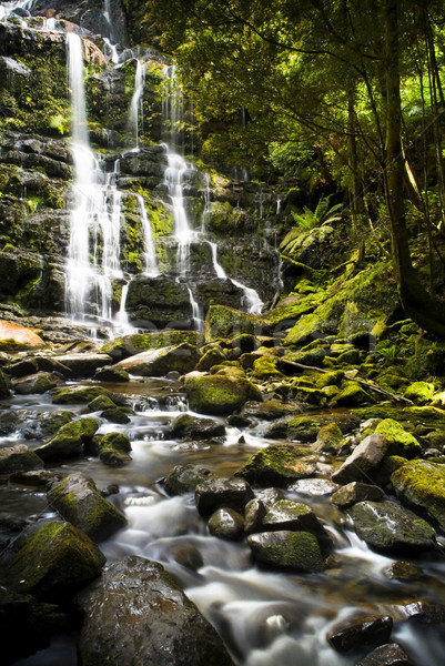 Tasmanië mooie wild rivieren park Australië Stockfoto © THP