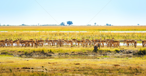 Animals At Watering Hole In Africa Stock photo © THP