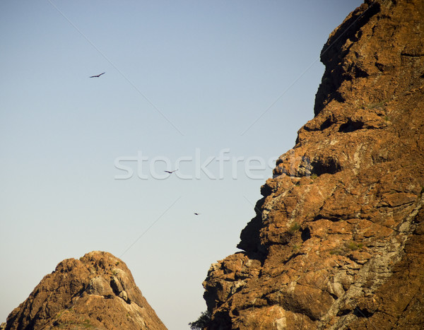 Soaring Eagles Stock photo © THP