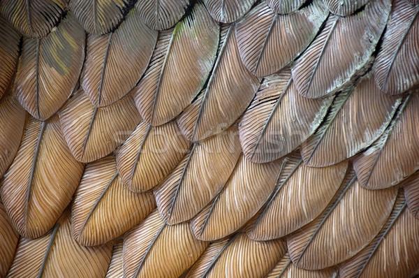 Sas tollak közelkép részlet madár toll Stock fotó © THP