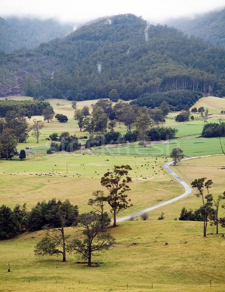 Tasmanië weg leidend Stockfoto © THP