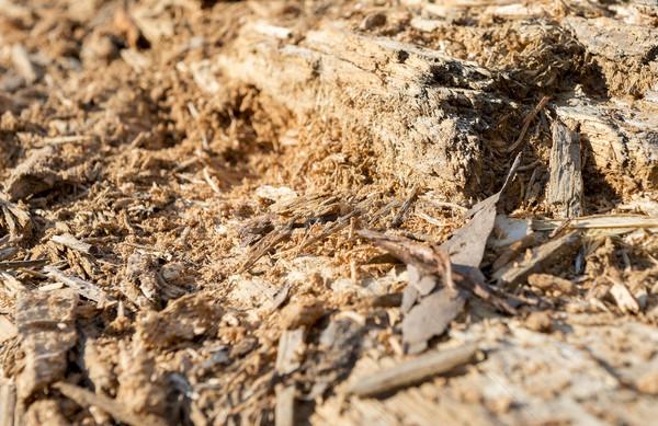 Termite Wood Stock photo © THP