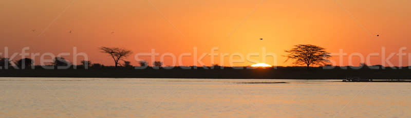 African Sunset Stock photo © THP