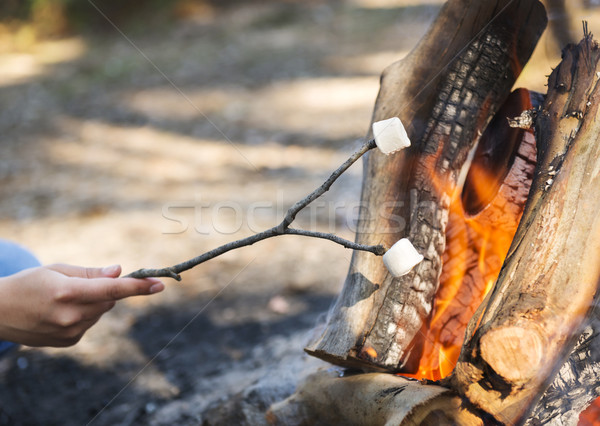 Roasting Marshmallows Stock photo © THP