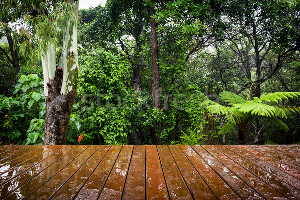 Timber Floor and Jungle Stock photo © THP