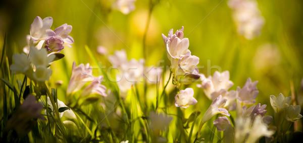 Wildflowers Stock photo © THP