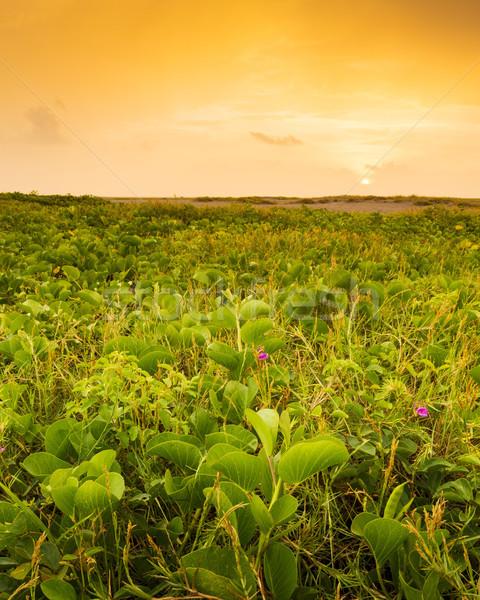 México puesta de sol tropicales playa flores nubes Foto stock © THP