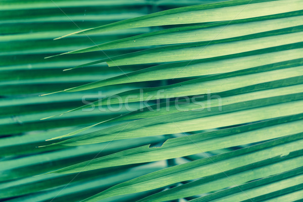Palm Frond Background Stock photo © THP
