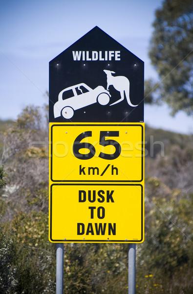 車 対 カンガルー オーストラリア 危険 ストックフォト © THP
