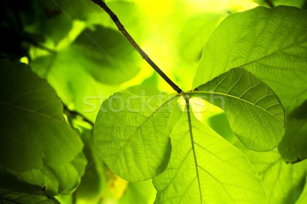 завода мелкий листьев богатых Сток-фото © THP