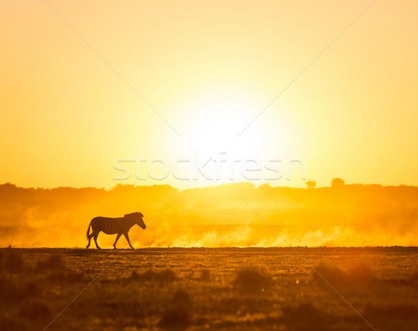 Stock fotó: Afrika · naplemente · tájkép · zebra · por · Botswana