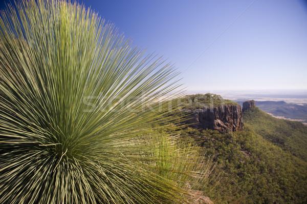 Grass Tree Stock photo © THP