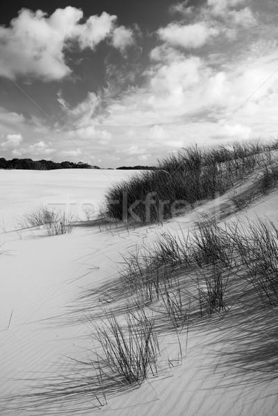 Kum büyük sahil plaj okyanus siyah ve beyaz Stok fotoğraf © THP