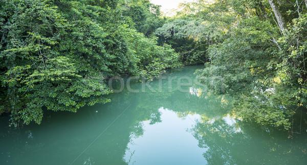 Selva río serenidad Río parque luz Foto stock © THP