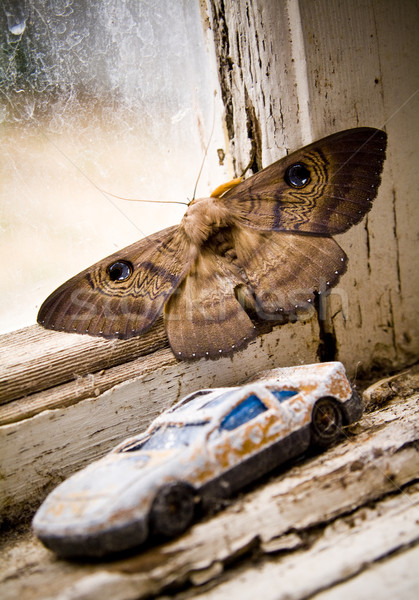 Moth Stock photo © THP