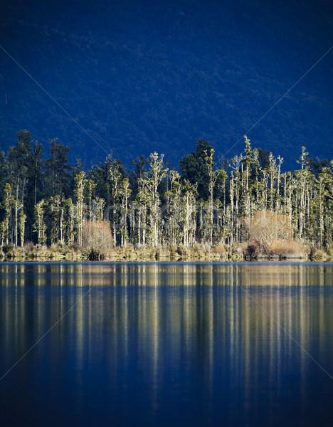 Foto stock: Lago · reflexão · árvores · água · garça-real · mar