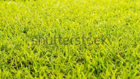 Trawnik rosa krople zielona trawa świeże rano Zdjęcia stock © THP