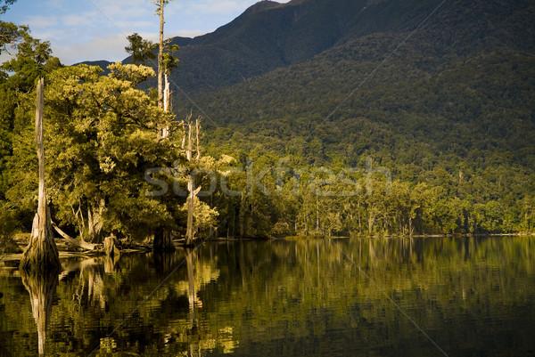Orman göl orman yansımalar kenar ağaçlar Stok fotoğraf © THP