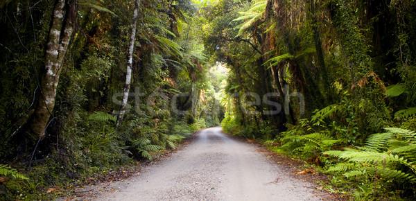 Jungle Road Stock photo © THP