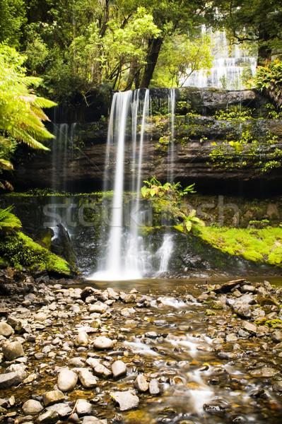 Tasmanië prachtig splash beneden veld park Stockfoto © THP