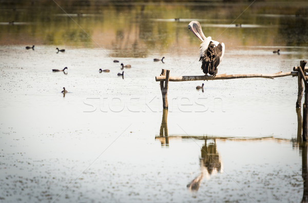Rio sul da austrália água Foto stock © THP