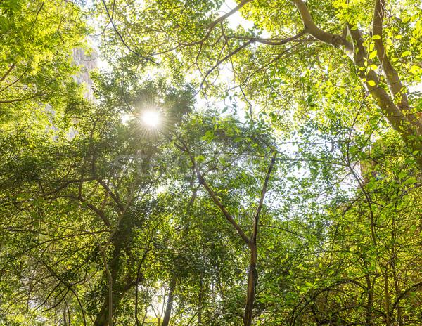 Jungle Canopy Africa Stock photo © THP