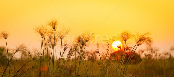 Afrika klasik afrika fil uzun çim gün batımı Stok fotoğraf © THP
