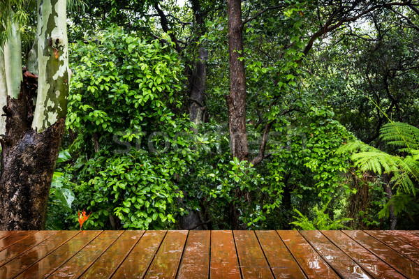 Wooden Floor and Forest Stock photo © THP