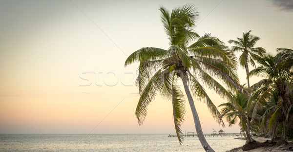 Playa escena puesta de sol espacio de la copia mar Foto stock © THP