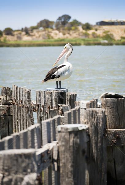 Sessão velho postar mar costa Foto stock © THP