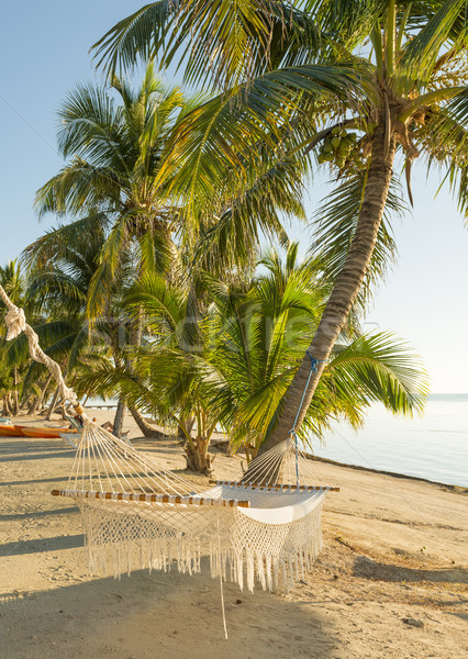 Stock photo: Tropical Holiday Hammock