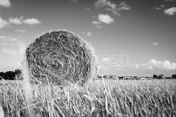 Hay Bales Stock photo © THP
