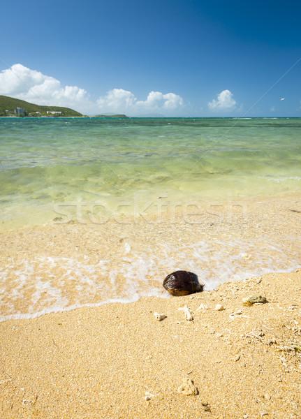 Hot Summer Beach Stock photo © THP