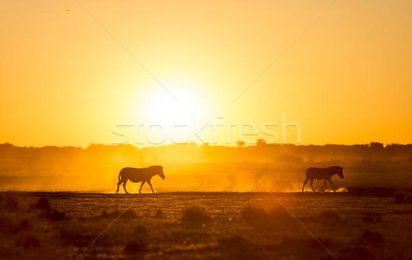 Zebra Sunset Botswana Stock photo © THP