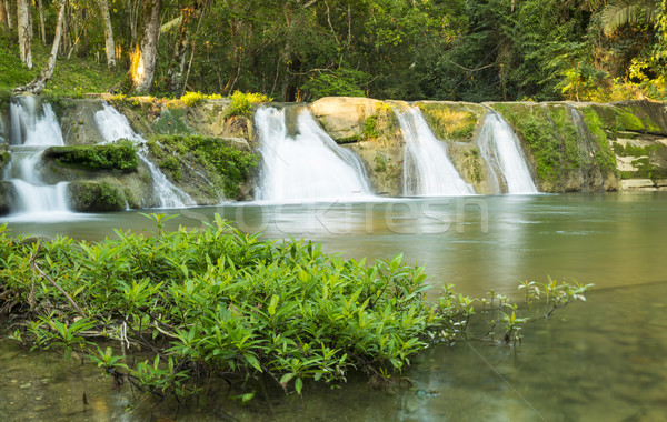 San Antonio Waterfall Belize Stock photo © THP