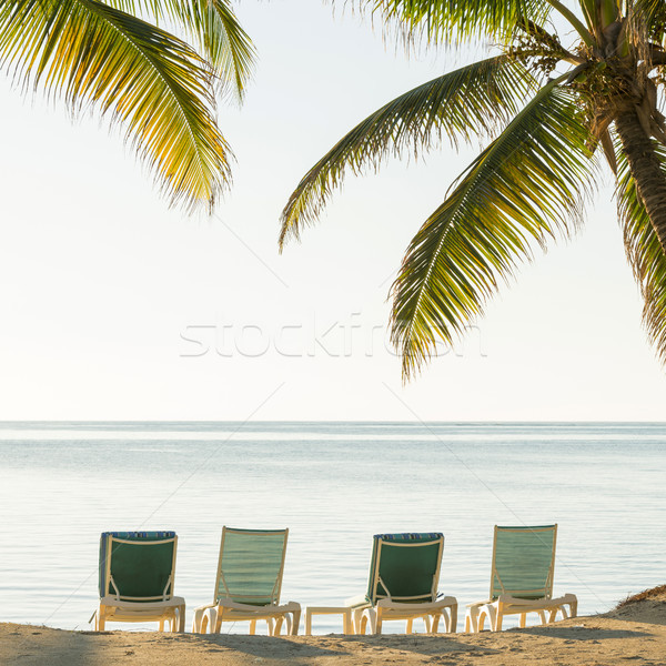 Tropical Beach Deckchairs Stock photo © THP