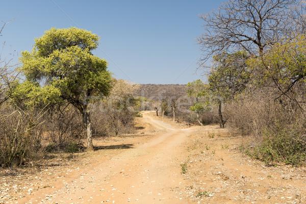 Botswana Desert Road Stock photo © THP