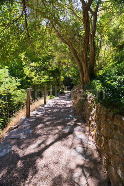 Forestales camino exuberante verde Australia sol Foto stock © THP