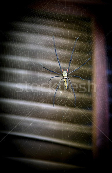 Huge Spider Stock photo © THP