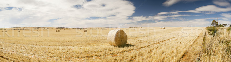 Harvest Stock photo © THP